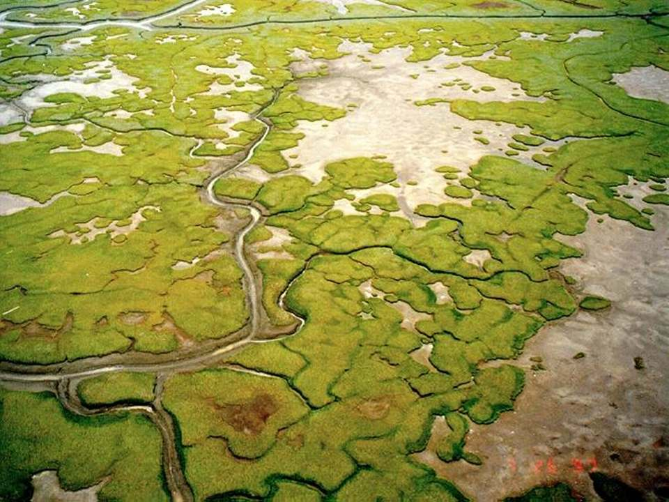 YKD tidal marshes photo lowres